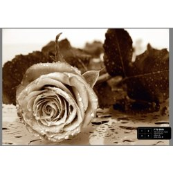 Dutch Wallcoverings Fotobehang Black White Rose 4 d