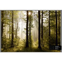 Dutch Wallcoverings Fotobehang Morning Forest 4 d